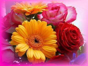 Хризантема кустовая - фото цветы