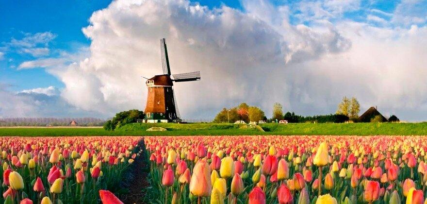"""Экскурсионный тур """"Германия-Голландия-Бельгия с посещением Парада цветов в парке «Кёкенхоф»"""" - фото pic_7166b208ef6fbfe9d9141b29033be7ec_1920x9000_1.jpg"""