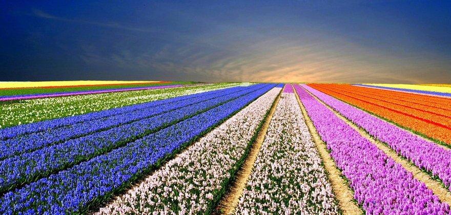 """Экскурсионный тур """"Германия-Голландия-Бельгия с посещением Парада цветов в парке «Кёкенхоф»"""" - фото pic_0bb0b41163d0734f7789be9972a06849_1920x9000_1.jpg"""