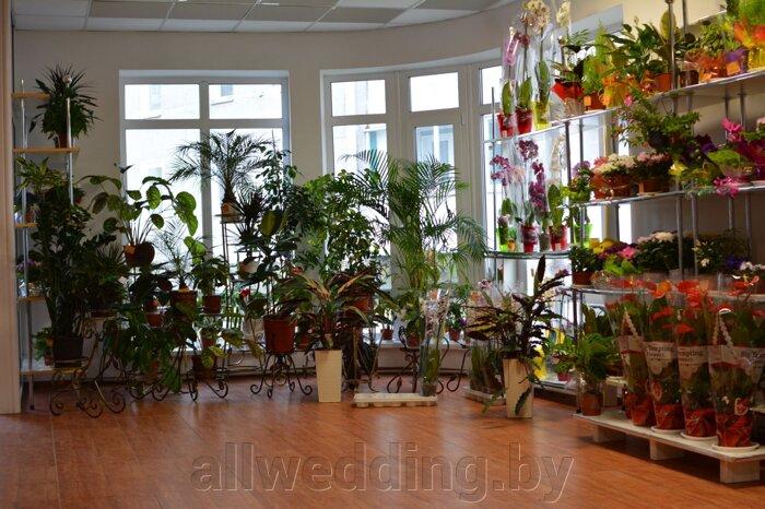 Наш магазин Цветы Успех в г.Сморгонь - фото pic_6f075bc8516d23f_700x3000_1.jpg