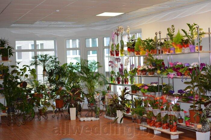 Наш магазин Цветы Успех в г.Сморгонь - фото pic_fabad5cf0003c47_700x3000_1.jpg