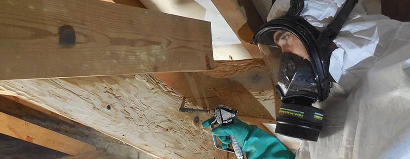 Система борьбы с насекомыми-вредителями и защиты древесины - фото pic_1405523eb0e88341eeb8d285972dabe9_1920x9000_1.png